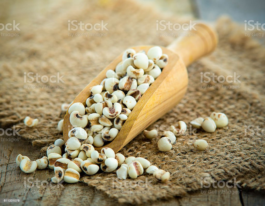 scoop of Adlay Millet on table stock photo