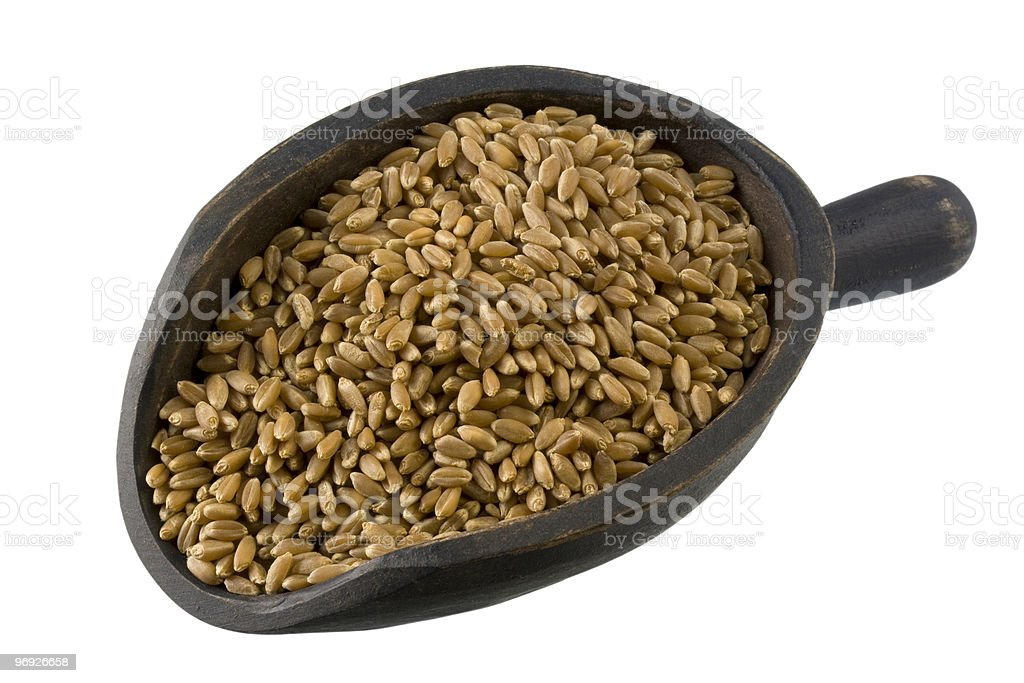 scoop of hard red winter wheat royalty-free stock photo