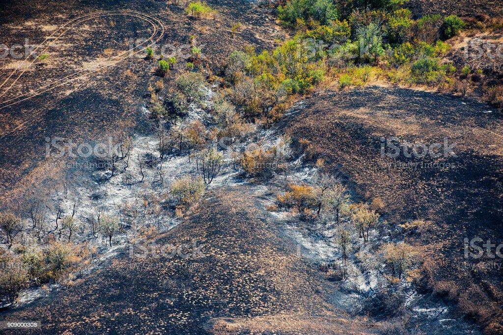 Árboles quemados y césped después del fuego. Vista aérea - foto de stock