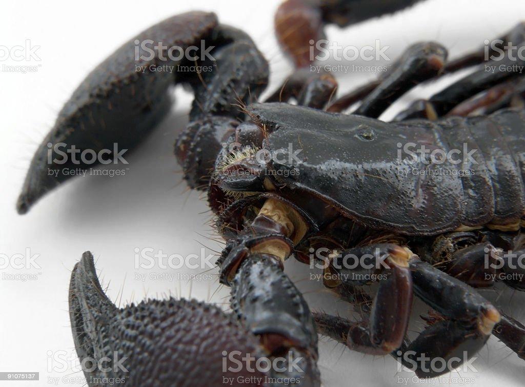 scorpion detail royalty-free stock photo