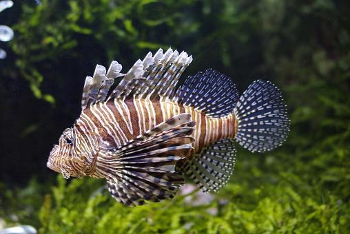 İskorpit Stok Fotoğraflar & Akrep - Hayvan'nin Daha Fazla Resimleri
