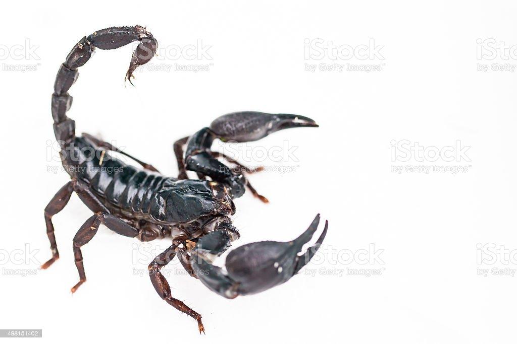 Scorpion. stock photo