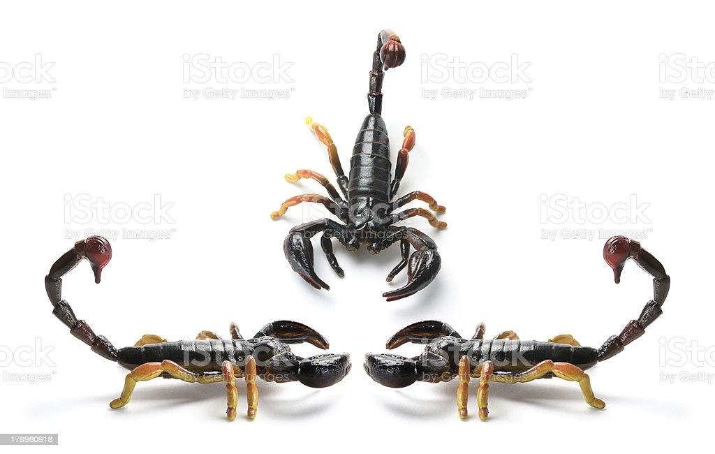 Scorpions stock photo