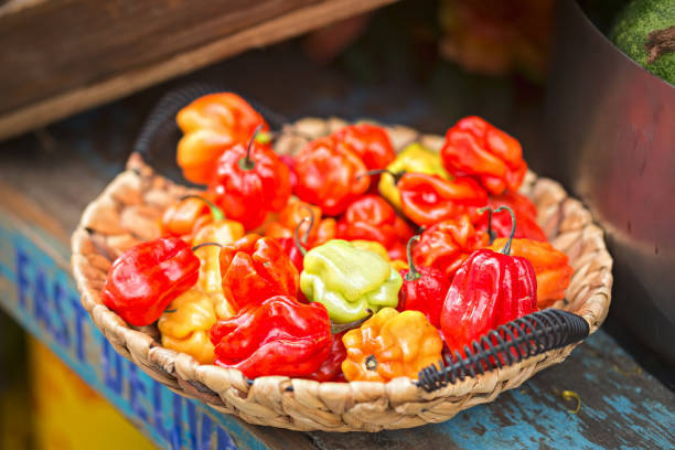 Scotch bonnet. Bonney peppers. Caribbean peppers. Vegetables in basket on street food stall display. Scotch bonnet. Bonney, Caribbean peppers. Bahama Mama. Jamaican Hot. Bahamian. Martinique pepper. Vegetables in basket on street display for Chinese Food Festival, Dublin, Ireland, August, 27, 2017 bonnet stock pictures, royalty-free photos & images