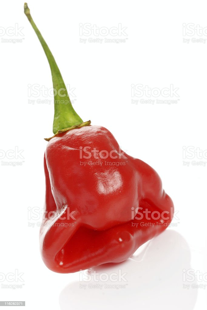 scotch bonnet pepper stock photo