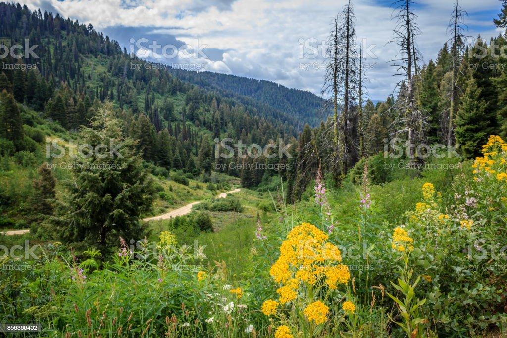 Scott Mountain Road stock photo