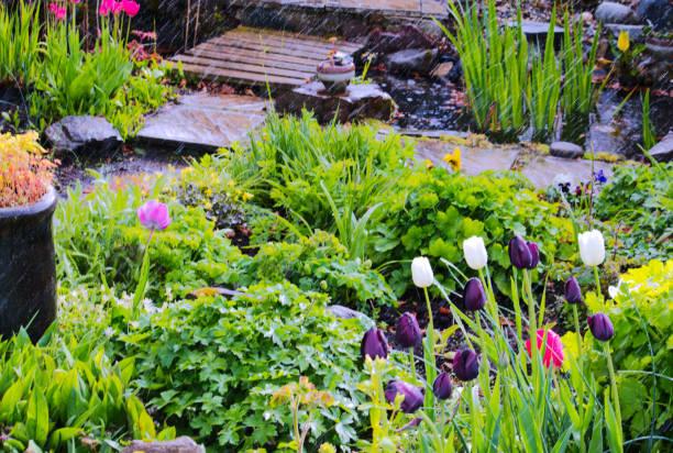 Chuva de primavera jardim, país escocês - foto de acervo