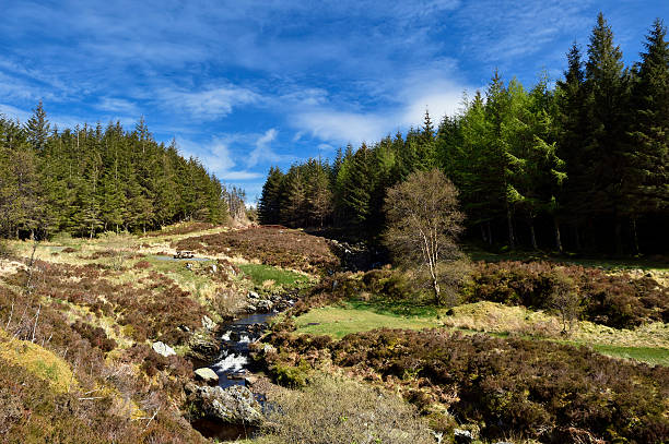 Scottish countryside with forest and a stream stock photo