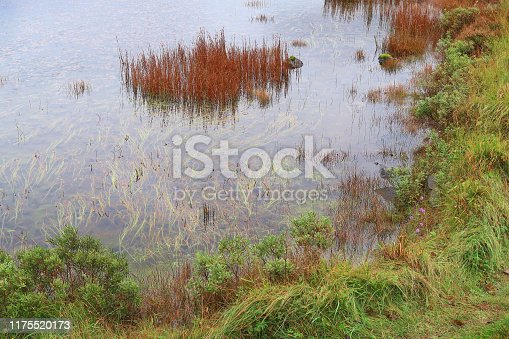 A pond in a Scottish Highland moor is surrounded with lush plant life saturated in rain, while the pond itself contains gracefully flowing grass plant life just below its surface.  In a horizontal frame, the gray water of the pond occupies the upper left two thirds - bordered in the lower left third by the pond's lush greenery arcing gracefully from the top of frame down and across the bottom left of frame.  A stand of red grass stems protrudes from the gray pond water.