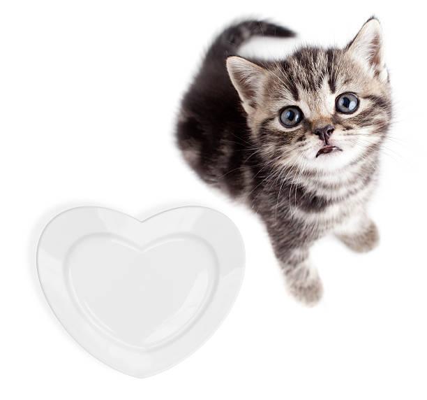 Scottish or british gray kitten top view isolated picture id162687138?b=1&k=6&m=162687138&s=612x612&w=0&h=06tkmm85mszg8aotxckojb1bbhmhr 2hsmgq81nlecg=
