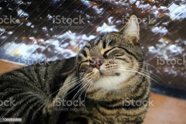 Scratching cat picture id1069935866?b=1&k=6&m=1069935866&s=612x612&h=nl1orzls6lfks4tug 4lsztzucnusx0g758h5gsb7ve=