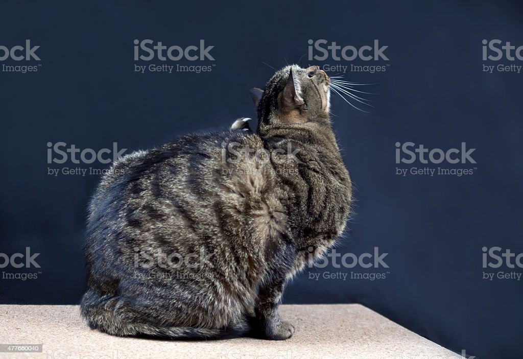 Scratching Cat stock photo