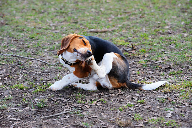 scratching dog - scratching stock photos and pictures