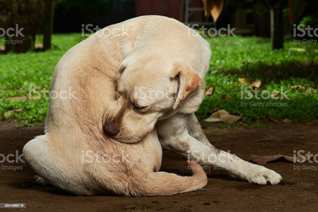scratching himself dog stock photo