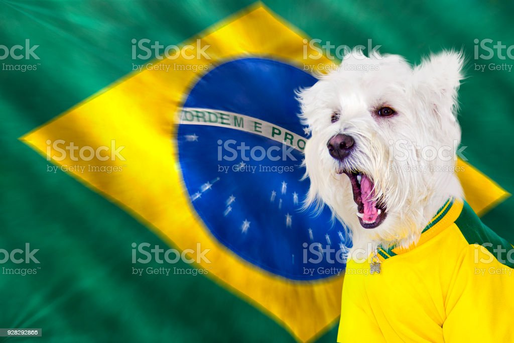 Screaming west at brazilian game stock photo