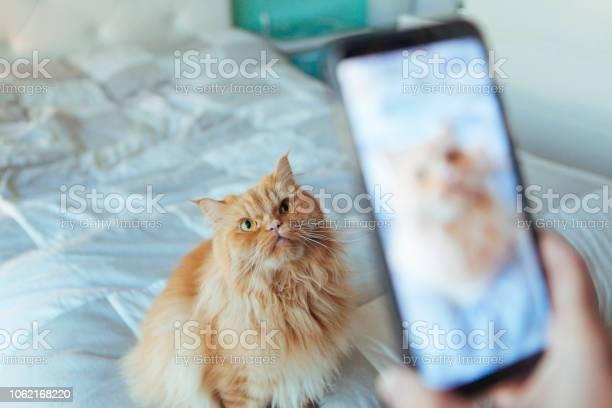 Screen photography on a telephone of a cat picture id1062168220?b=1&k=6&m=1062168220&s=612x612&h=zcurdejyknxcoj3sksucivgddnaklfydhfi hq3yoig=