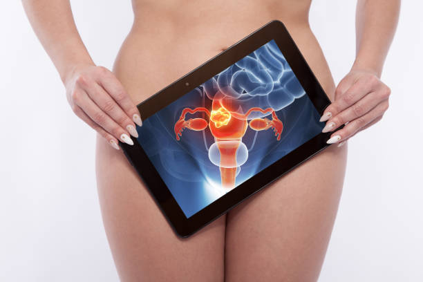 Screening of the reproductiv organs of a woman Screening of the reproductiv organs of a woman female private parts stock pictures, royalty-free photos & images