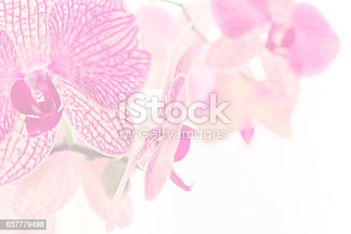 istock Screensaver of Twigs Blooming Orchid 637779498