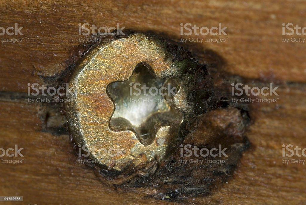 Screw in wood stock photo