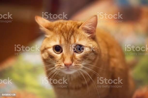 Screw up cat emotion picture id649890106?b=1&k=6&m=649890106&s=612x612&h=hyruxu4i8gh6isukzo8hiruoxqvzqobflzhbu1 44j4=