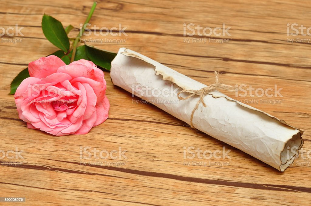 A scroll of old paper tied with a rope and a pink rose stock photo