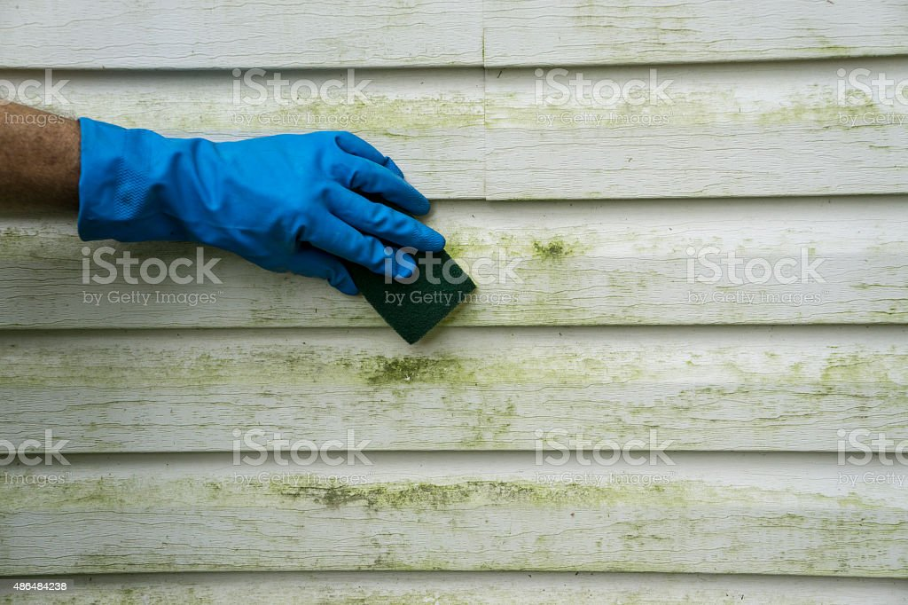 Scrubbing Algae and Mold  Off Vinyl SIding stock photo