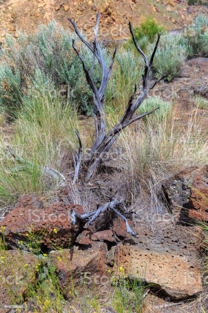 Scrubby dead bush stock photo