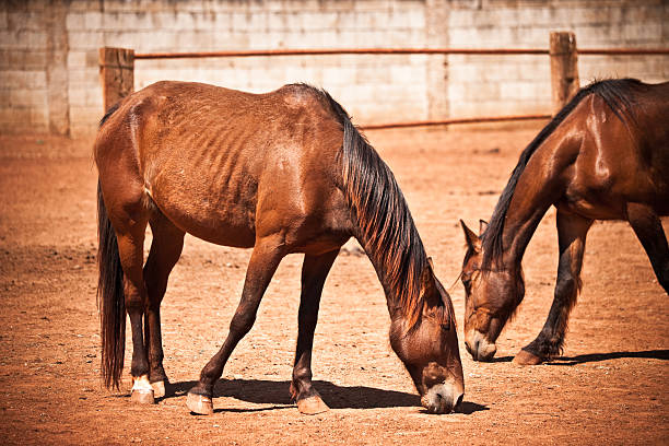 Scruffy Horses stock photo