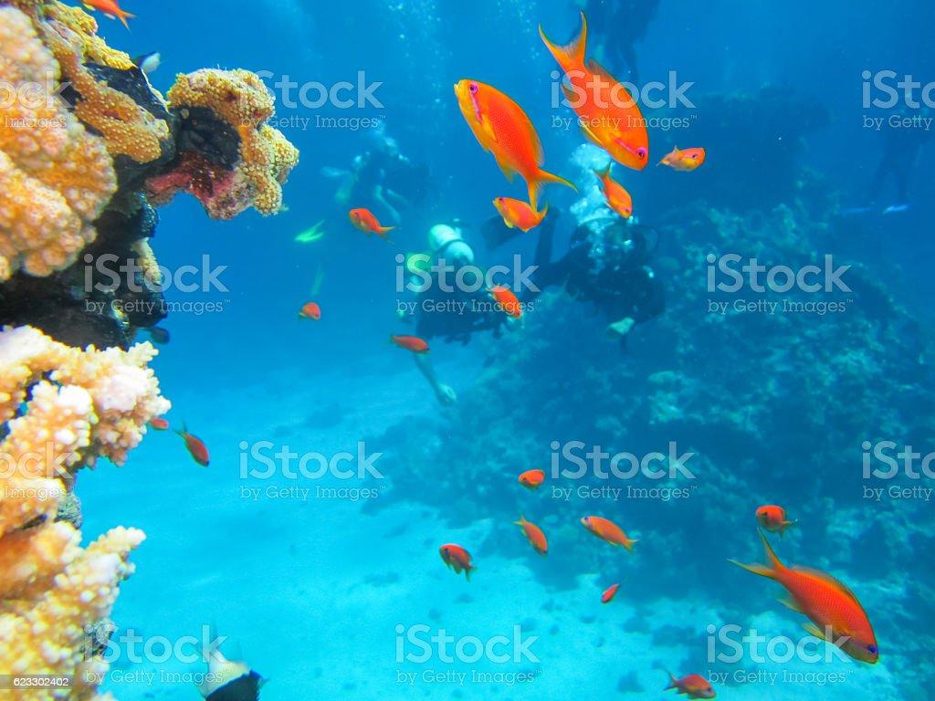 Scuba dive in the Red Sea stock photo