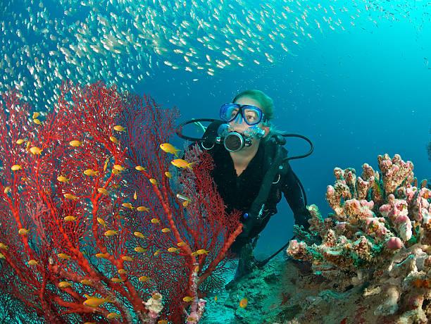 스쿠버 다이버 admires 피쉬와 레드 쿨링팬 산호색 - 세이셸 뉴스 사진 이미지