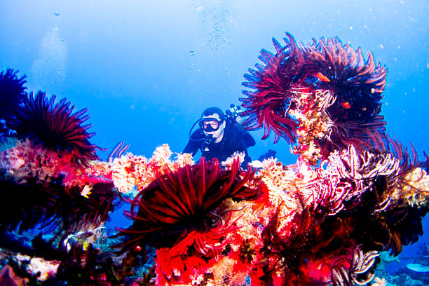 Scuba diver and bright coral Coral formations with underwater scuba diver shot in Vanuatu vanuatu stock pictures, royalty-free photos & images