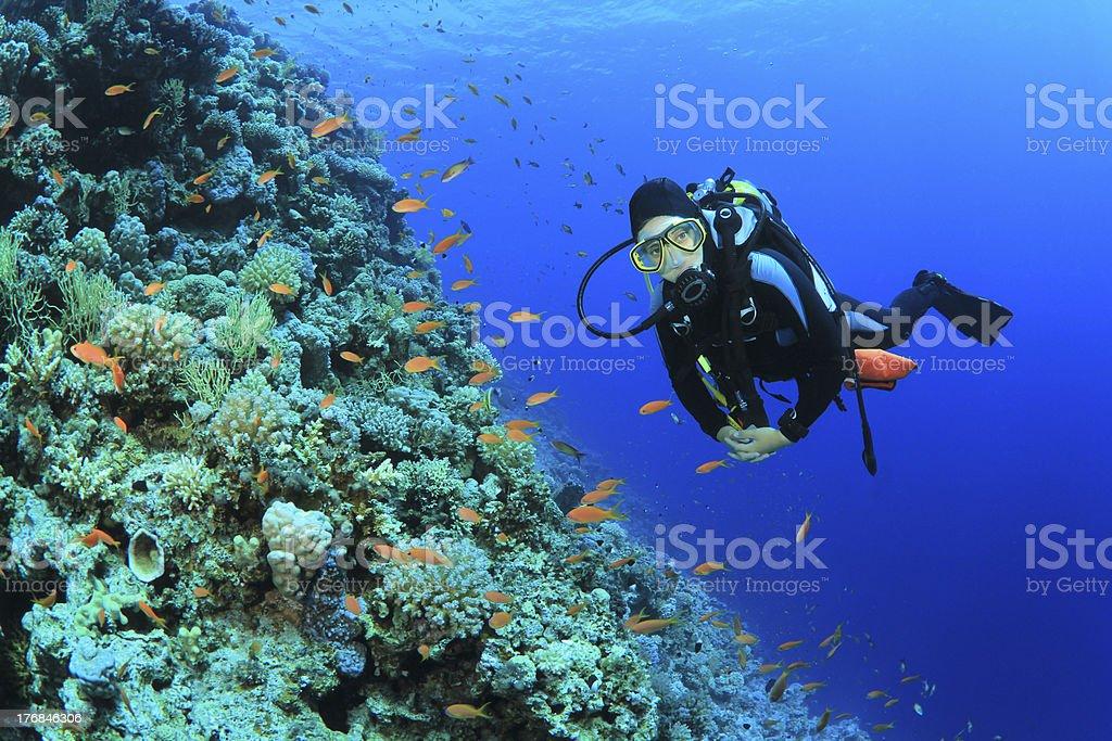 Buceador y Coral Reef foto de stock libre de derechos