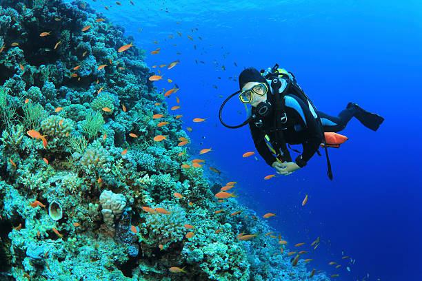 Plongeur et corail - Photo
