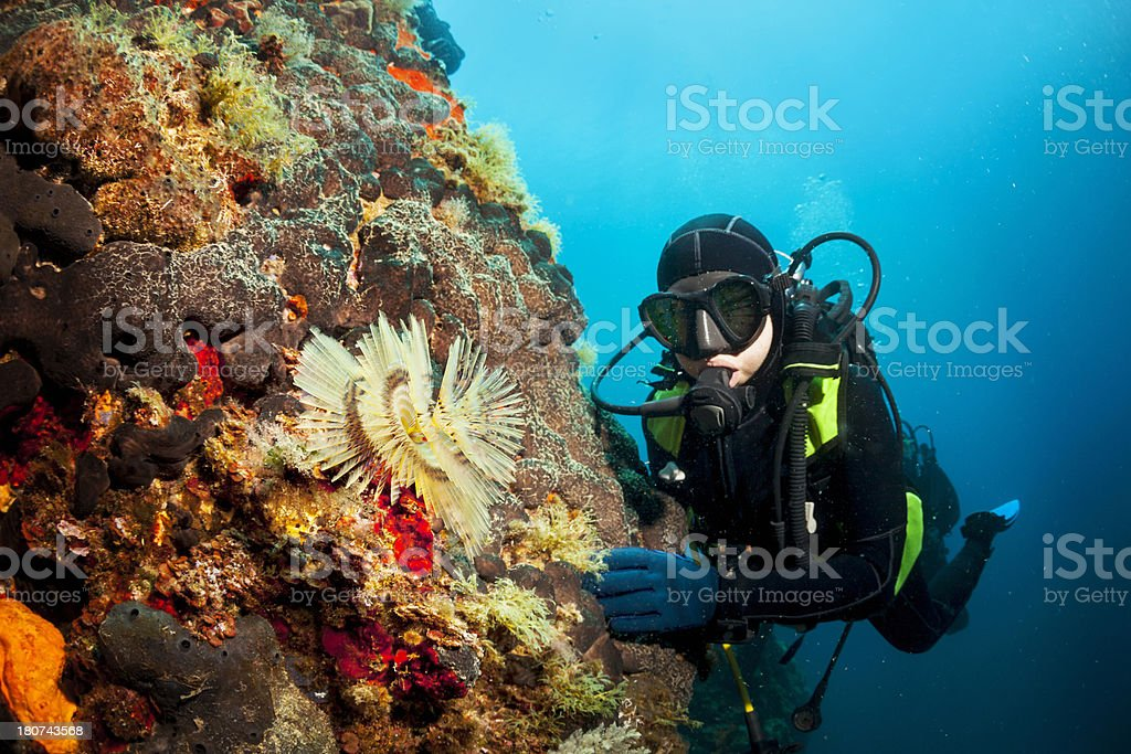 Scuba Diver  And Coral Reef royalty-free stock photo