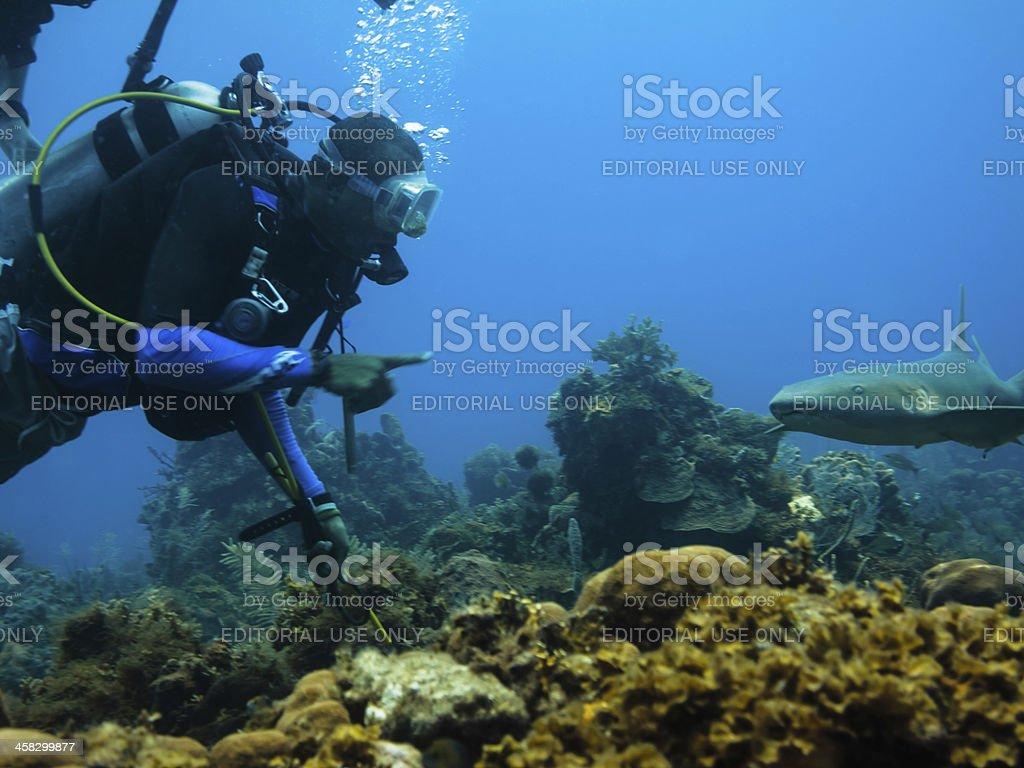 Plongée Sousmarine Et Requinnourrice Sur Le Récif De Corail