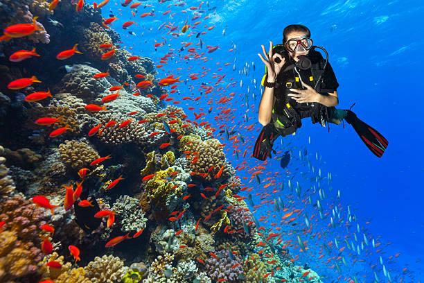 Plongeur Découvrez un récif de corail montrant Bien signer - Photo