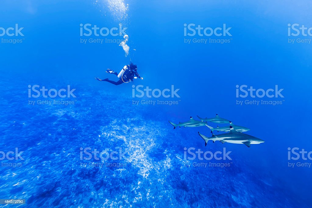 Scuba Diver Hovering Over Four Sharks in Tiputa Pass stock photo