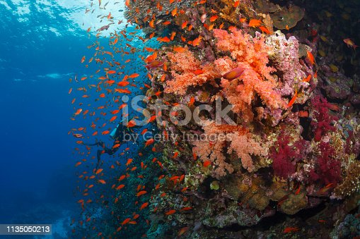 Scuba diver is exploring and enjoying Coral reef  Sea life  Sporting women Underwater photo