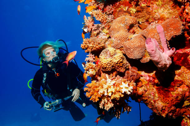 Scuba diver is exploring and enjoying Coral reef  Sea life  Sporting women Underwater photographer stock photo