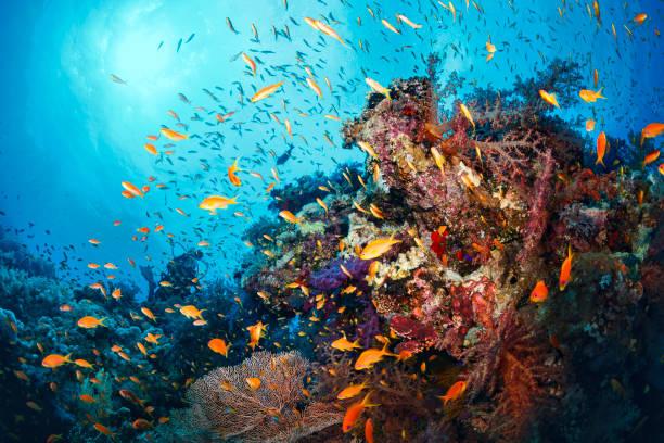 Scuba Diver ist erforschen und genießen Korallenriff Meer Leben Sporting Frauen – Foto