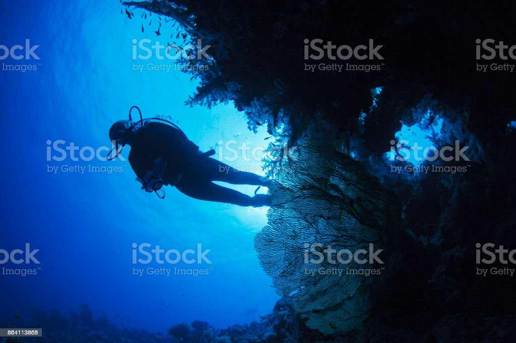 Scuba diver is exploring and enjoying Coral reef  Sea life  Sporting women Underwater photo royalty-free stock photo