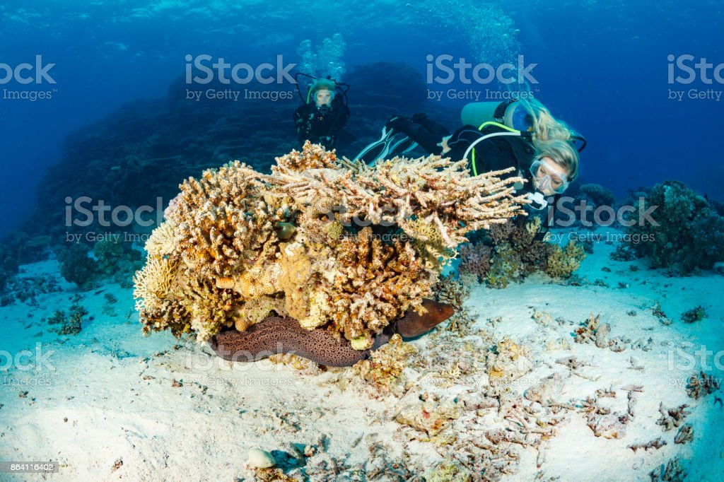 Scuba diver is exploring and enjoying Coral reef  Sea life  Two women Underwater photographer Red sea royalty-free stock photo