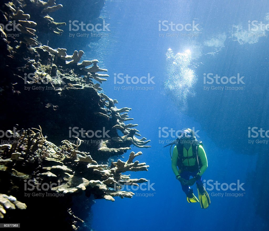 Scuba Diver looking at Coral royalty-free stock photo