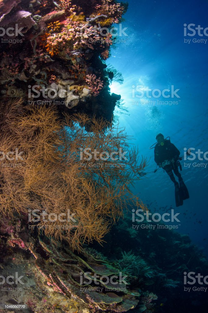 Scuba diver on a tropical reef with sun rays on the surface stock photo