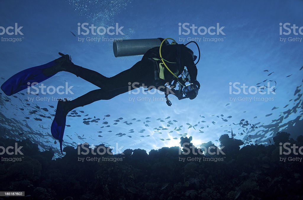 Scuba diver on coral reef at sunset royalty-free stock photo
