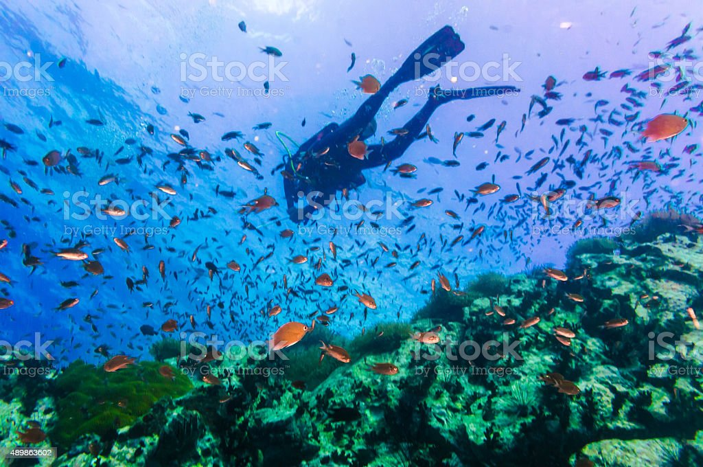 Scuba Diver on coral reef in clear blue water stock photo