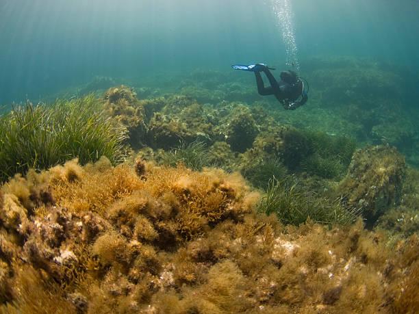 scuba diver on reef in the mediterranean sea stock photo