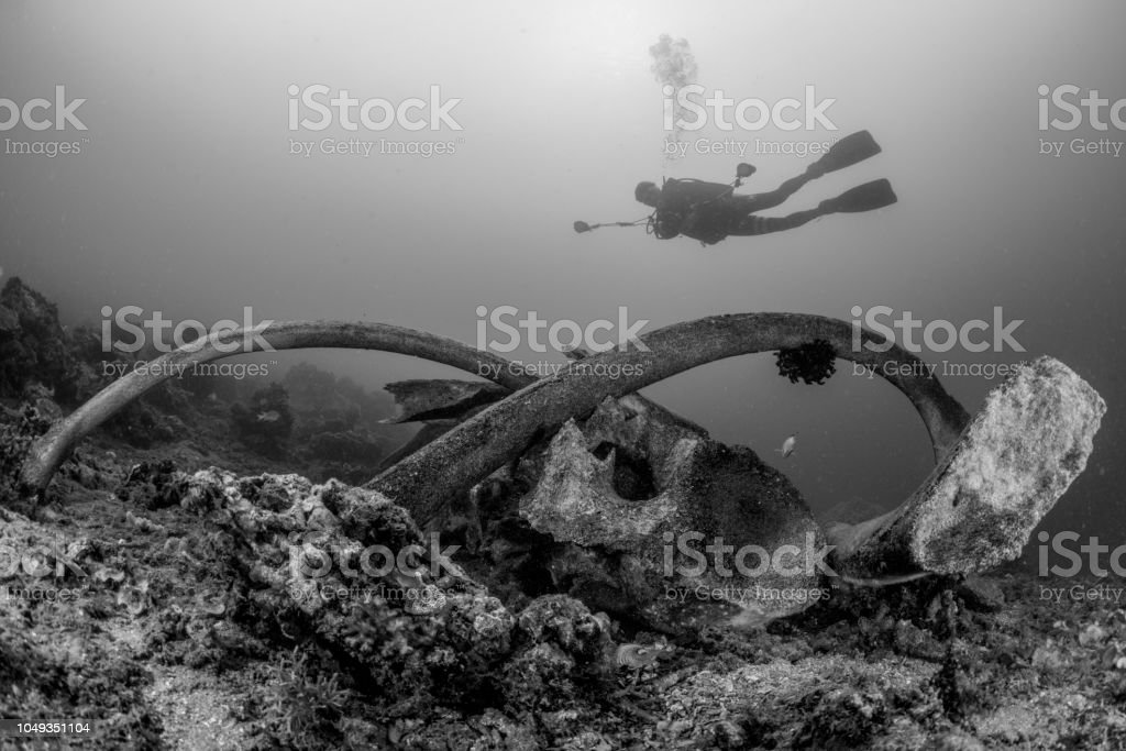 Scuba diver over the bones of a sperm whale in Indonesia in shallow depth in black and white stock photo