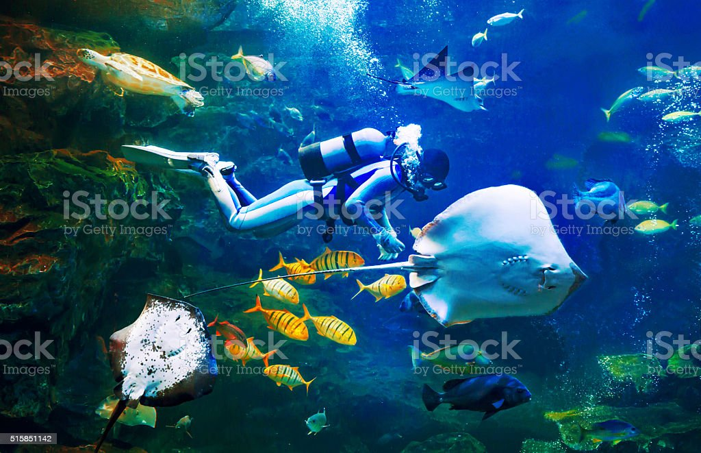 Scuba diver swiming under the sea with many fishes stock photo