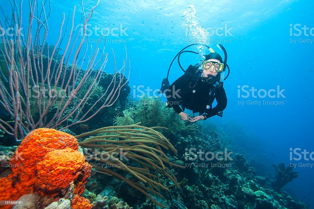 Scuba diver swimming over coral reef  stock photo